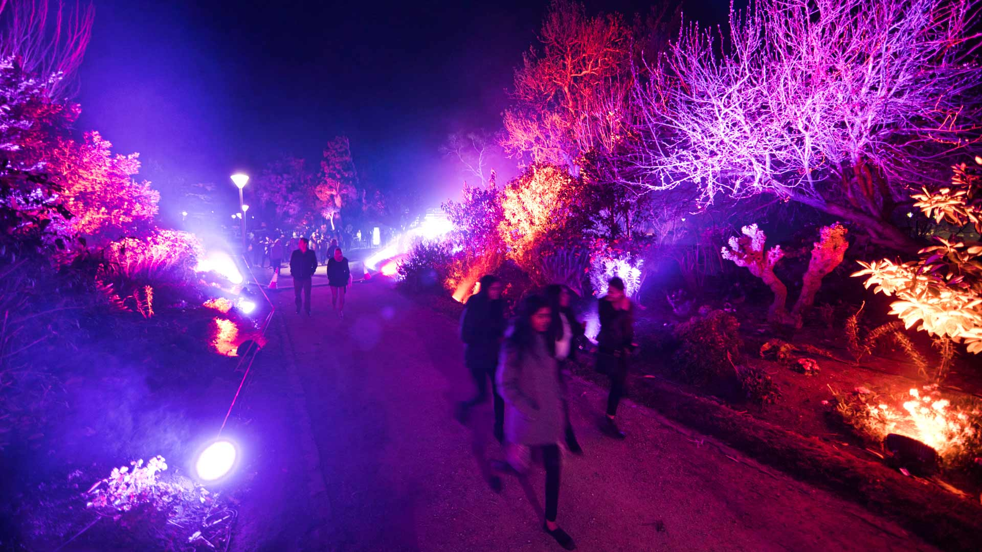 Glow Winter Arts Festival 2019