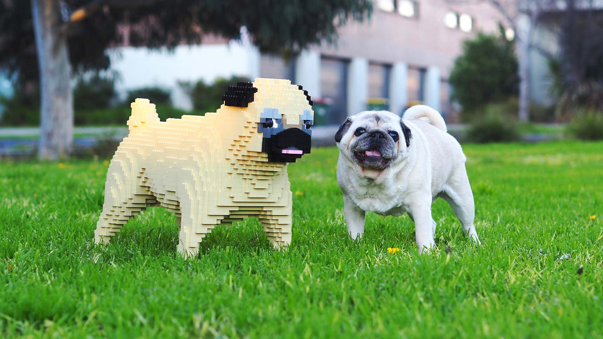 A Life-Size, Custom-Made Lego Version of Your Dog Is a Thing You Could Own
