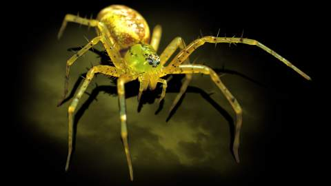 Spiders – The Exhibition