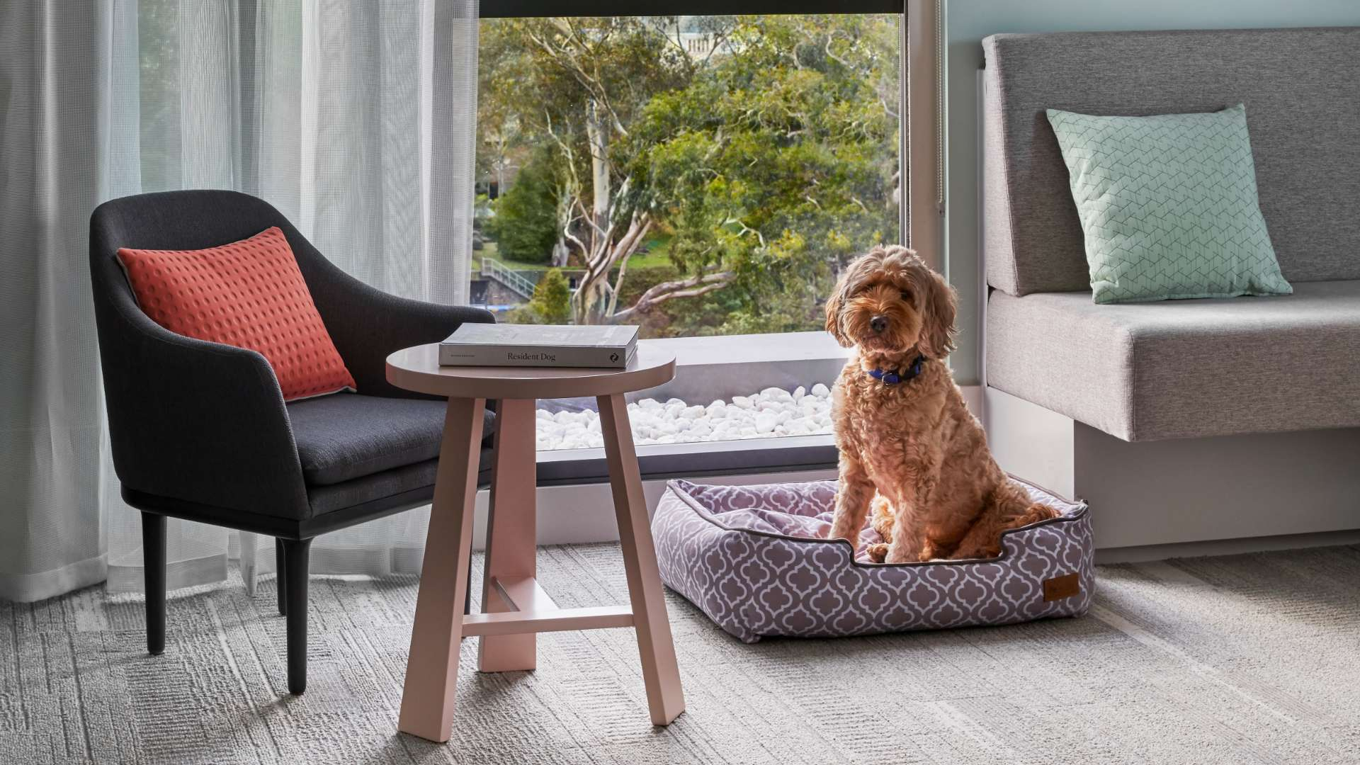 Element Richmond Is the Pet-Friendly Melbourne Hotel That'll Let Your Pooch Stay In Your Room