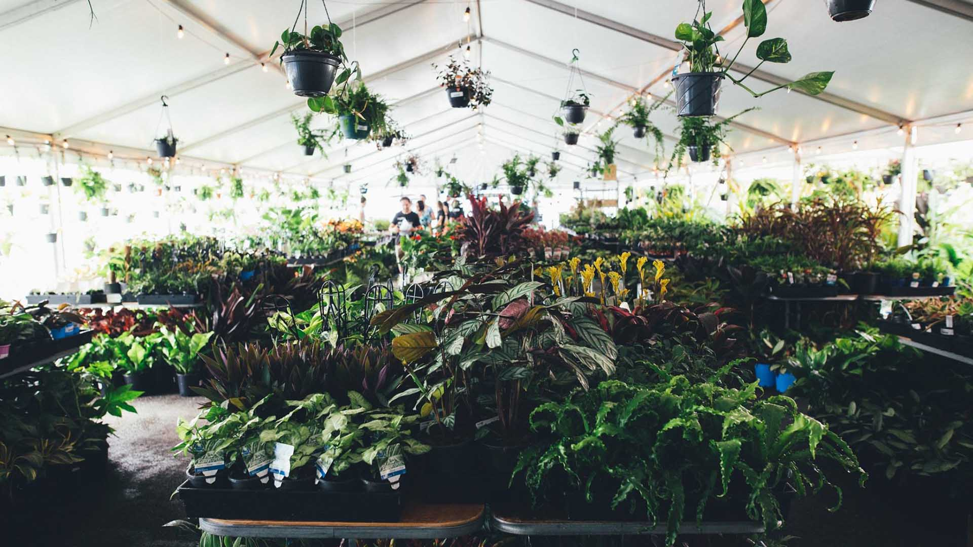Jungle Collective 'Tropicana Party' Indoor Plant Warehouse Sale
