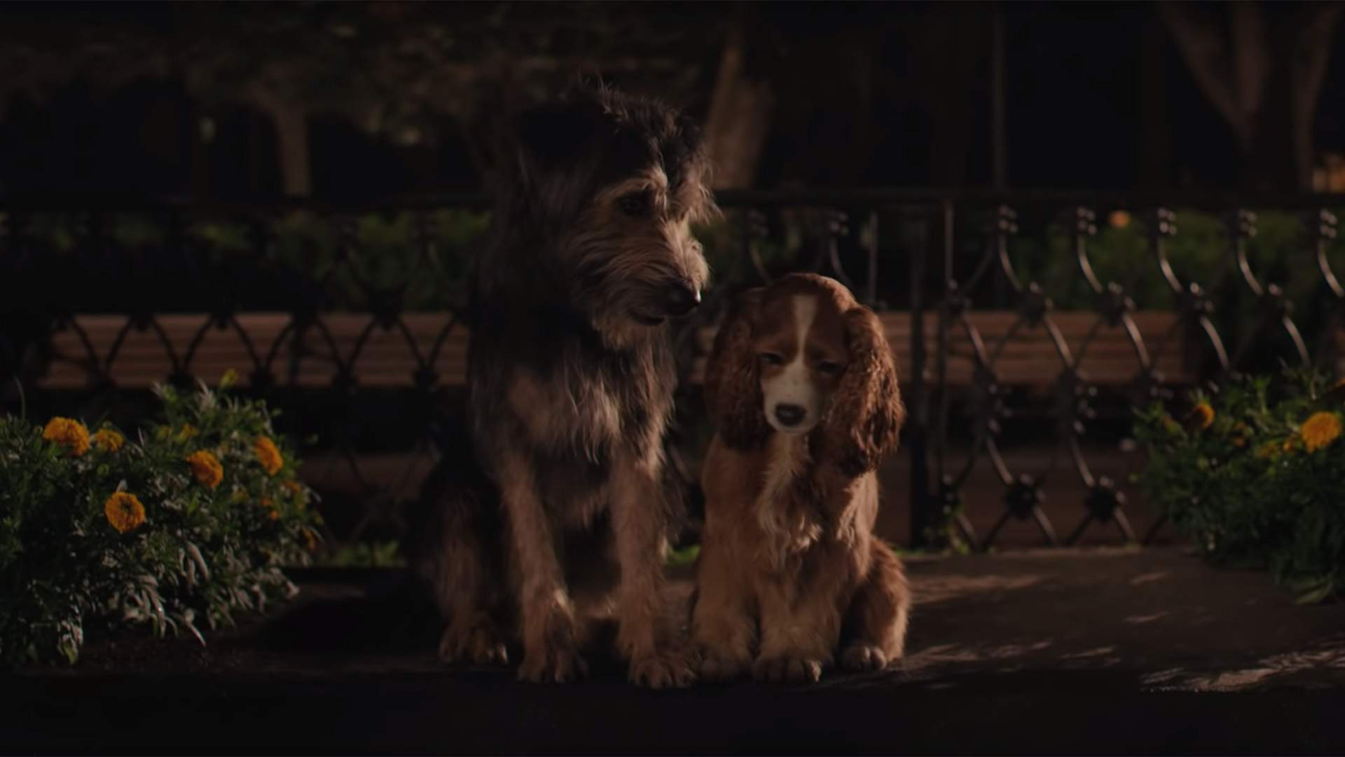 Disney's New Live-Action 'Lady and the Tramp' Trailer Is Here With Even More Adorable Dogs