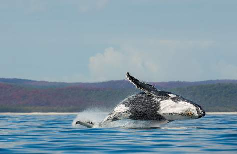 Australia Is Now Home to the World's First Whale Heritage Site