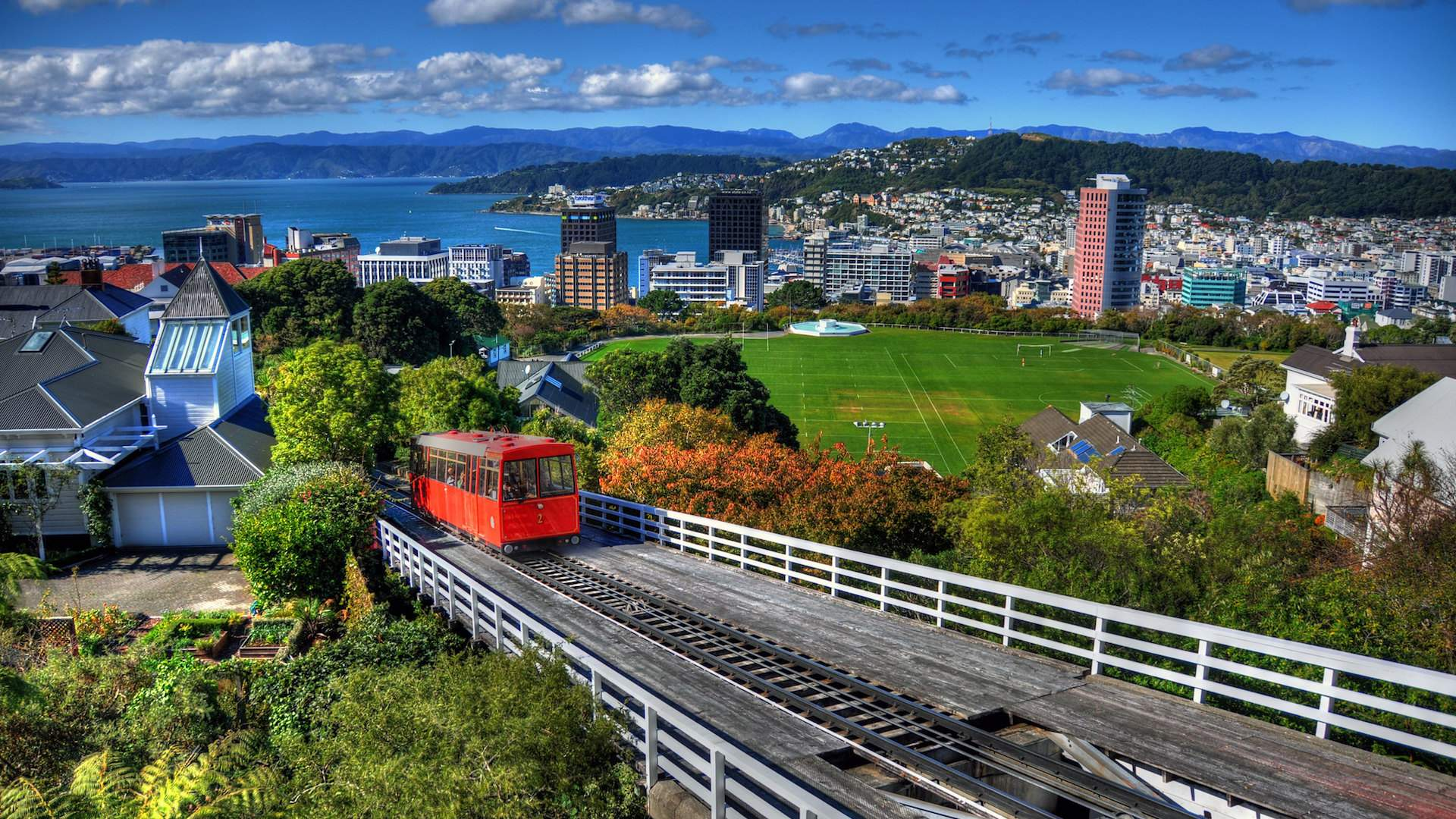 Five Green Spaces Where You Can Escape the Hustle in Wellington