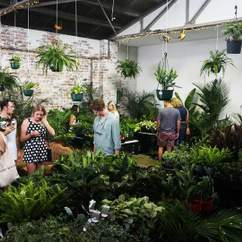 Jungle Collective 'Summertime Madness' Indoor Plant Warehouse Sale