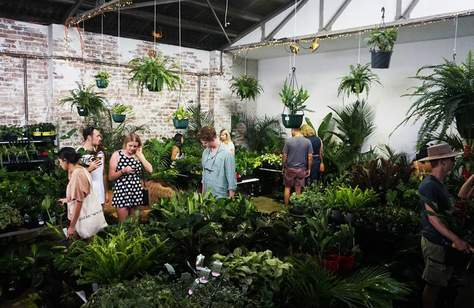 Jungle Collective 'Let's Get Physical' Indoor Plant Warehouse Sale