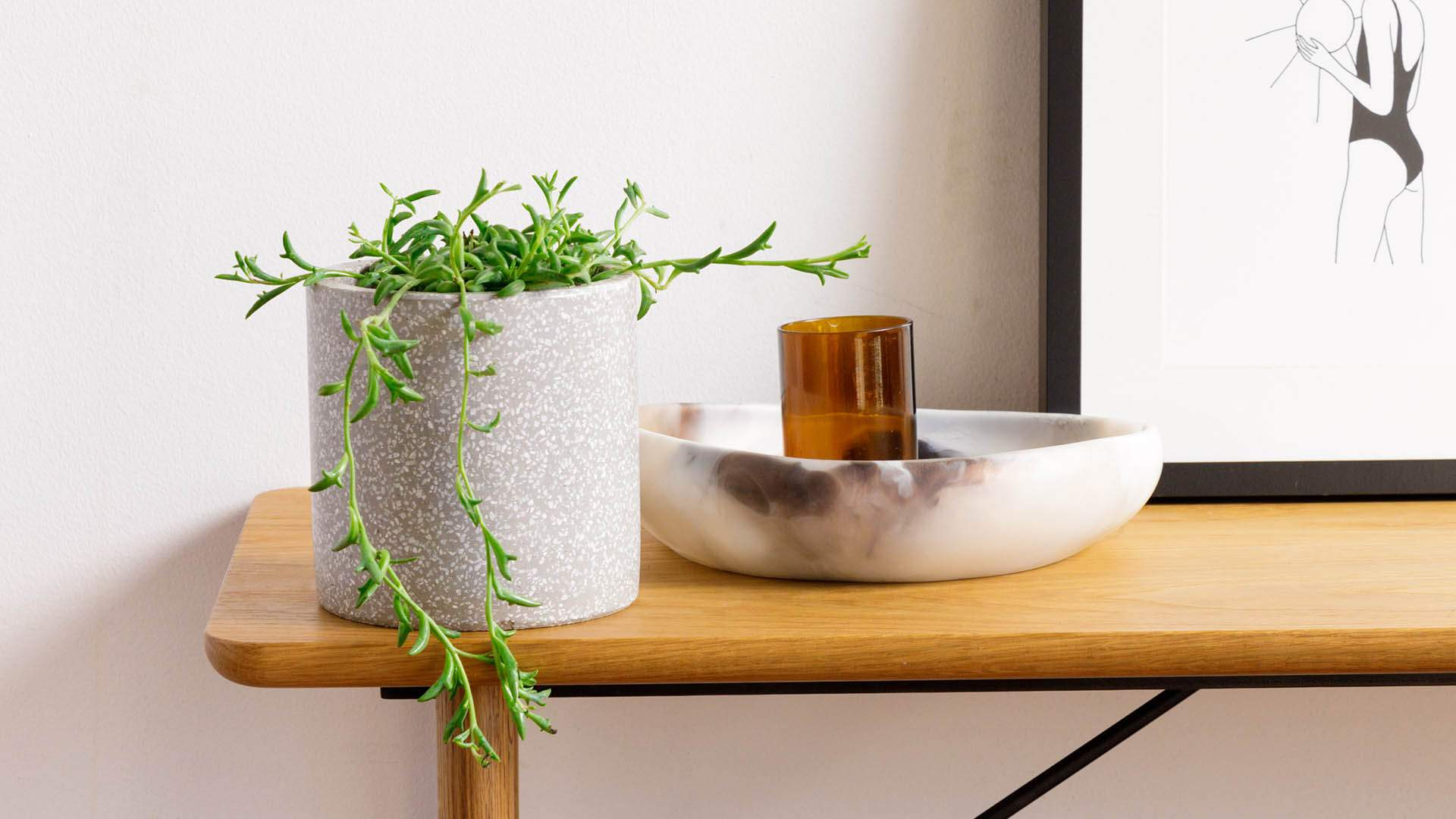 The Plant People Is the New Brisbane Nursery Delivering Indoor Plants to Your Door