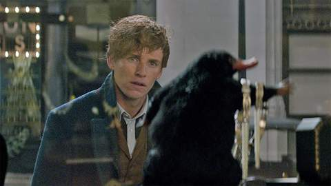 'Fantastic Beasts' Is Being Turned Into a Huge 'Harry Potter'-Themed Natural History Exhibition