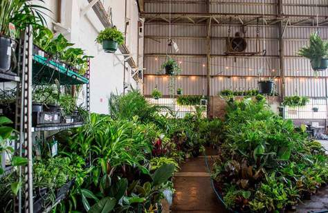 Jungle Collective 'Calathea Worship' Indoor Plant Warehouse Sale