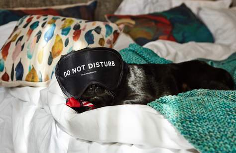 Sydney's Old Clare Hotel Now Has Pet-Friendly Suites Complete with 24-Hour Room Service
