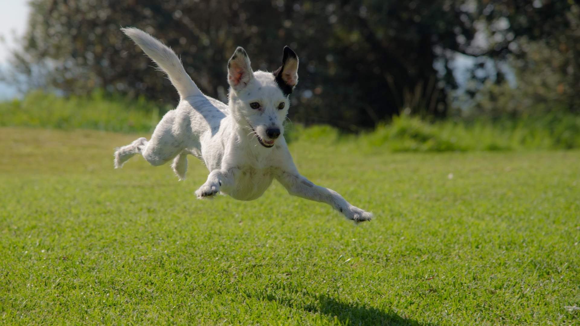 Melbourne's Inner Suburbs Are Getting 24 New Parks and Off-Leash Dog Areas