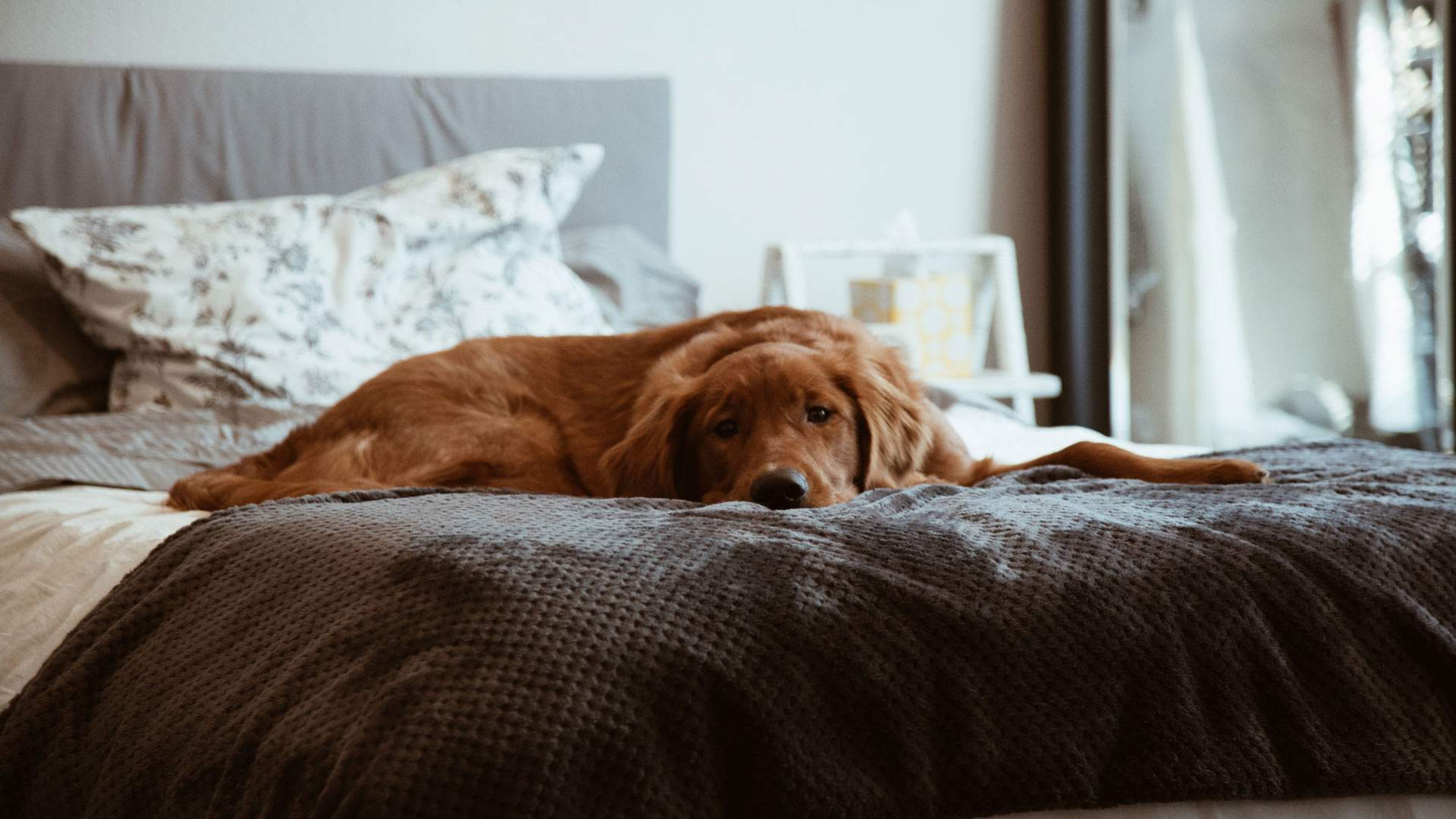 Victoria's New Laws Making it Easier for Renters to Own Pets Come into Effect Today