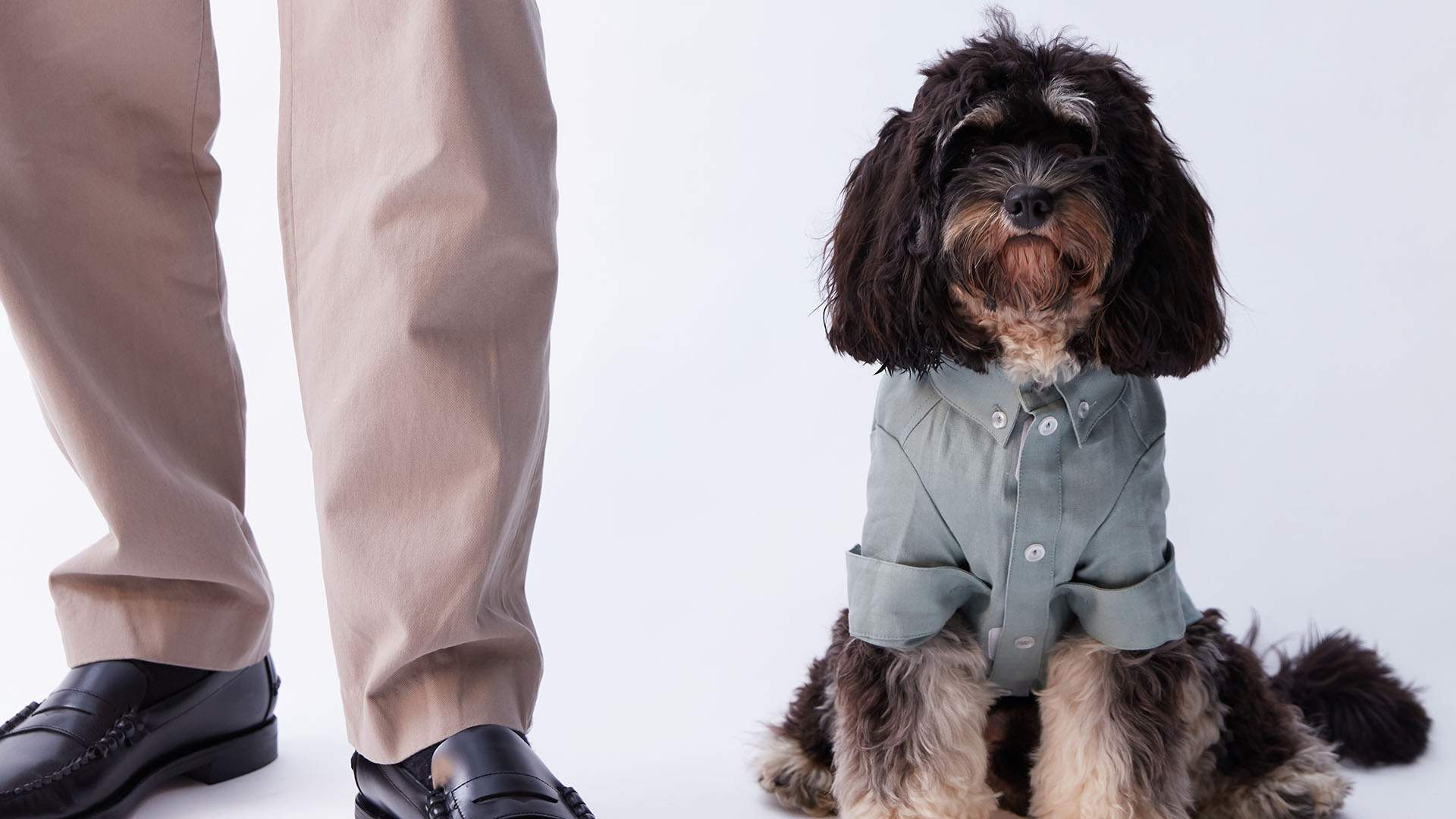 The Iconic Has Launched a Stylish New Pet Fashion Range for Supremely Adorable Dogs