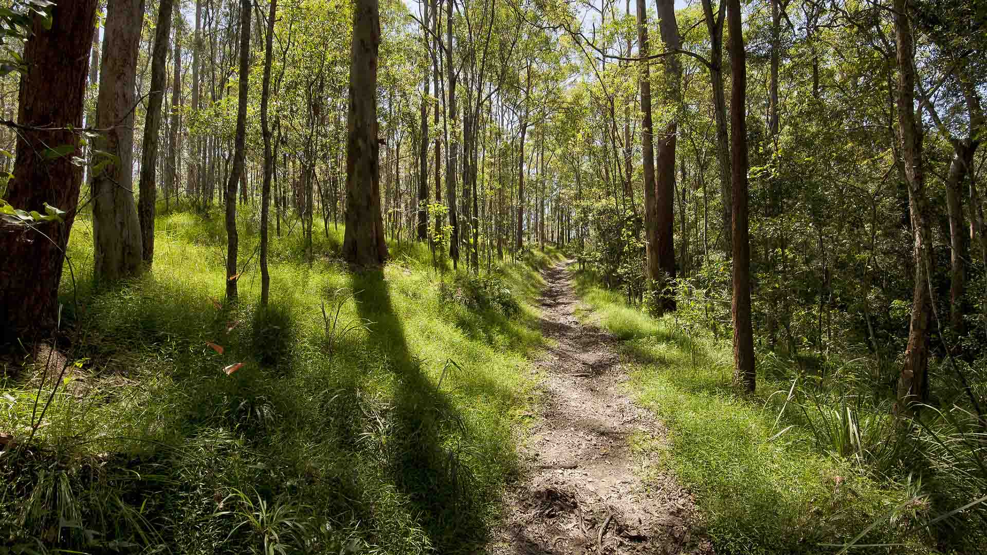 Five Scenic Hikes You Can Enjoy Within 50 Kilometres of Brisbane