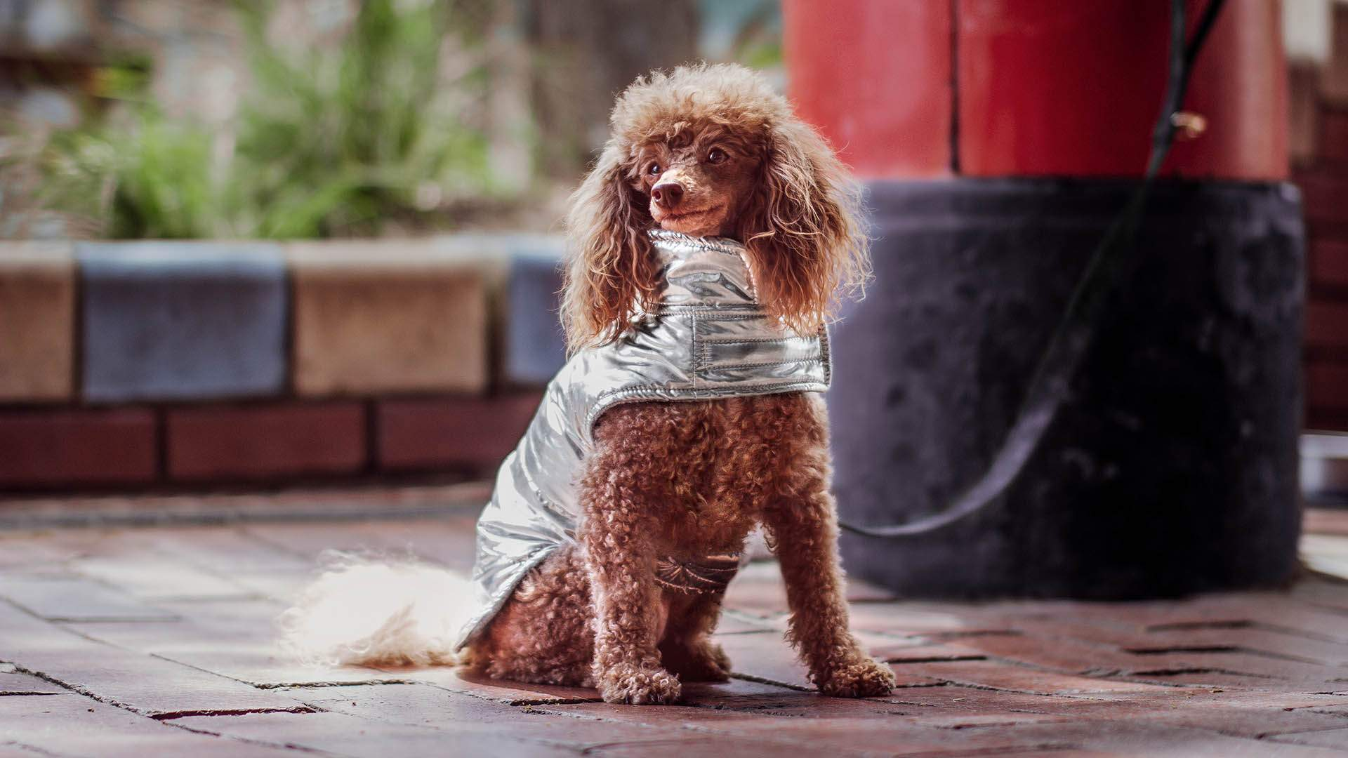 Petstock Has Released a New Line of Accessories to Keep Your Pets Cute and Cosy This Winter