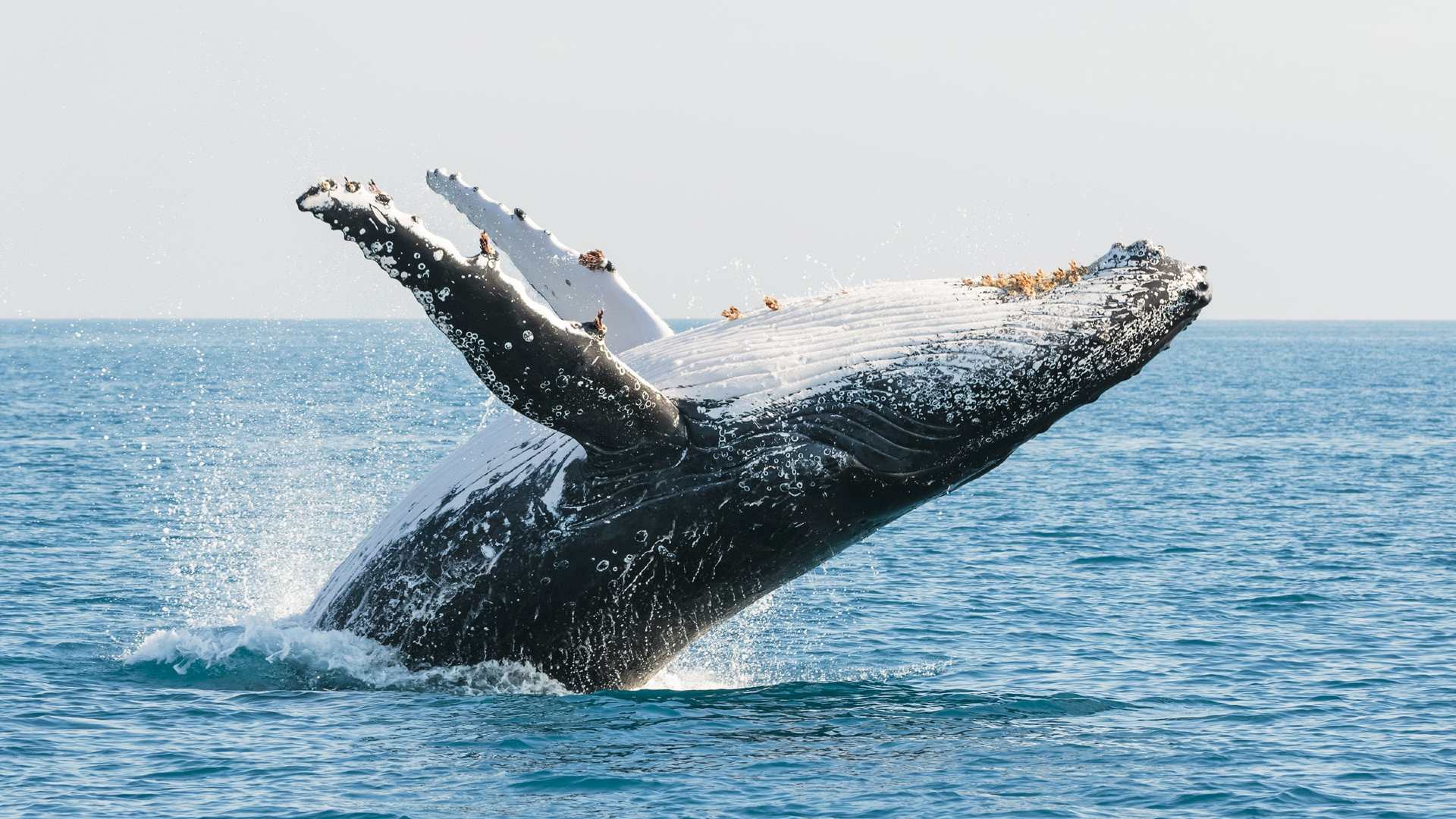 The Eight Best Coastal Spots for Whale Watching Across Australia