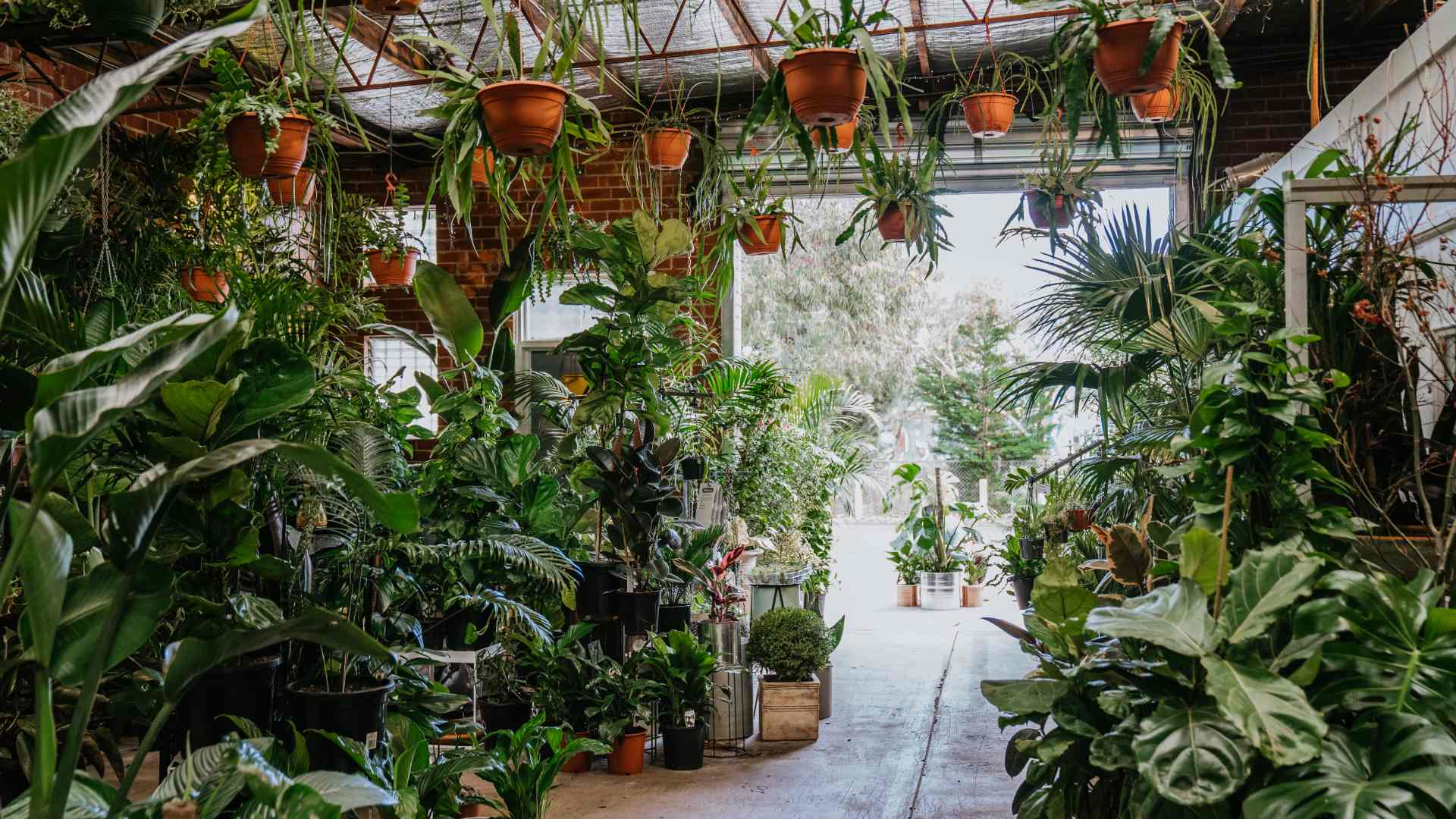 Botanicah Is Prahran's New Supersized Plant Warehouse Here to Fuel Your Houseplant Obsession