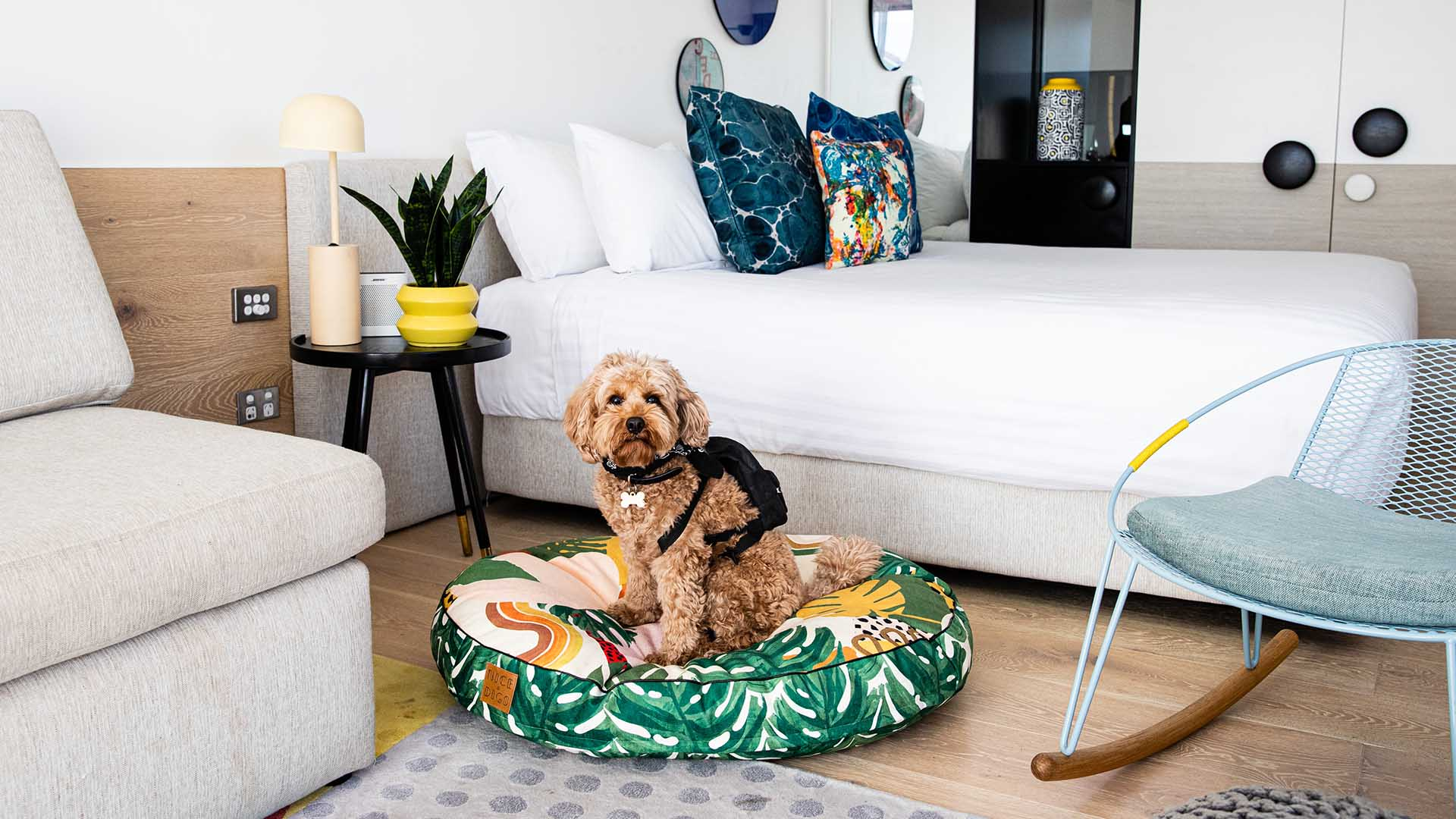 You Can Now Take Your Pooch for an Indulgent Sleepover at QT's Australian and New Zealand Hotels