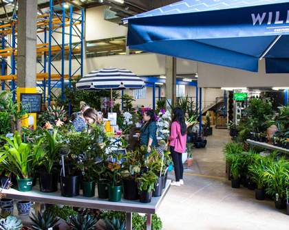 Plant Base Is Sydney's Newest Nursery with Over 100 Different Indoor and Outdoor Species