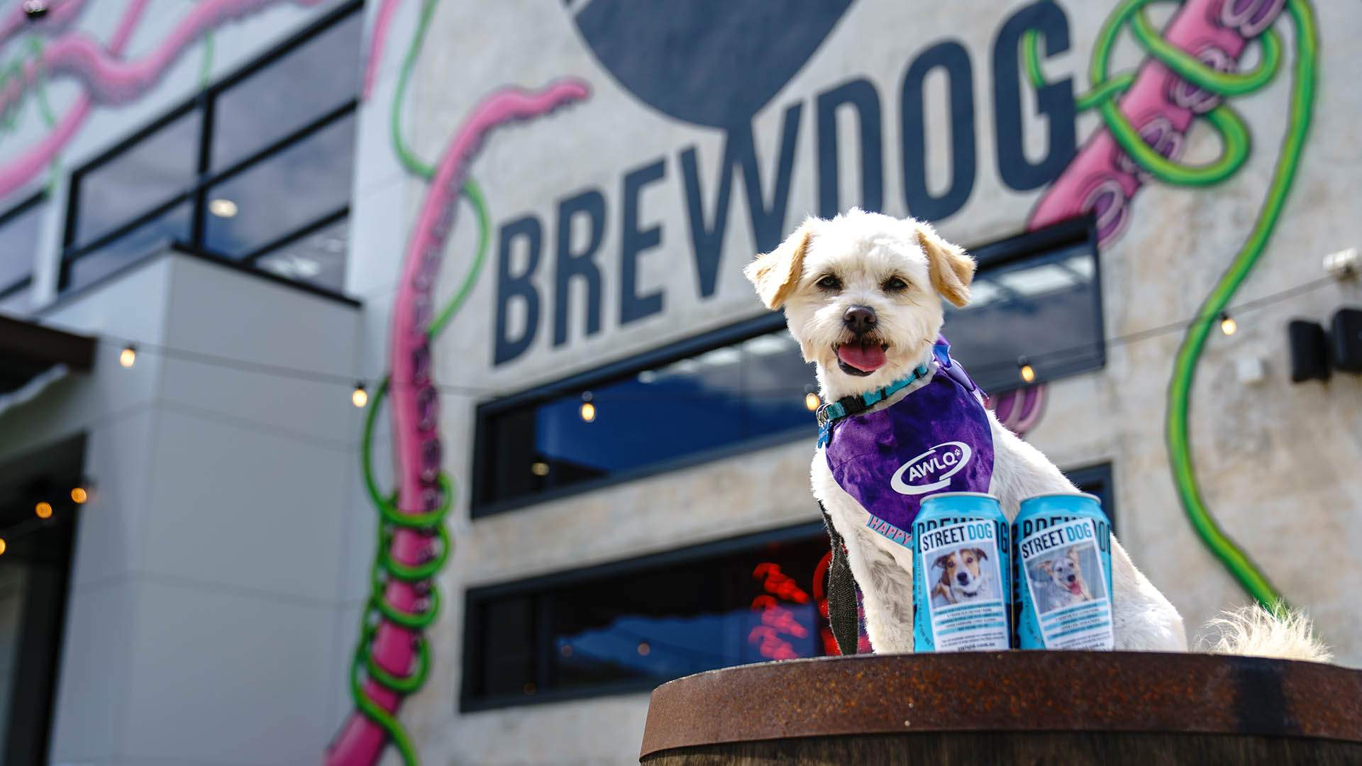 BrewDog Has Given Its Cans a Makeover to Profile Cute Pooches Currently Up for Adoption