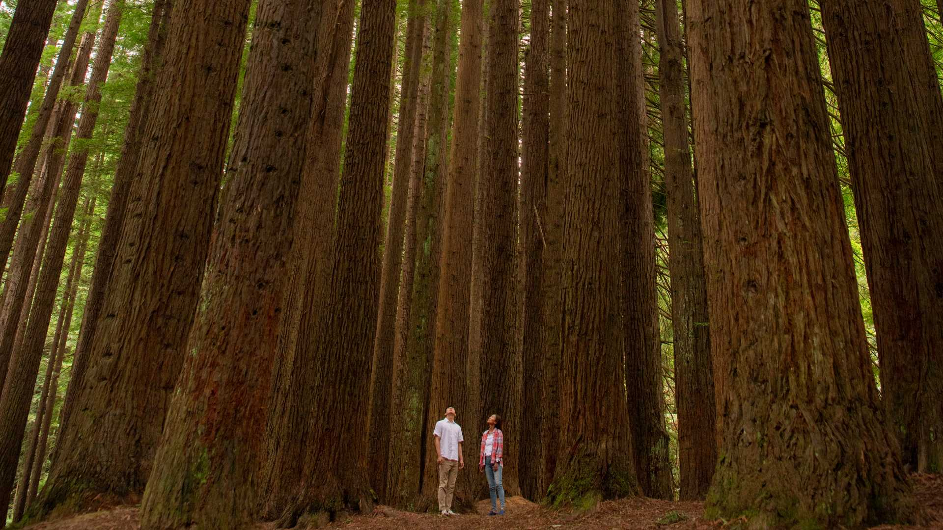 Eight Unexpected Natural Wonders to Visit Around Victoria