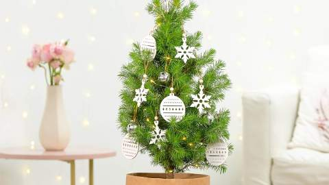 Floraly Is Delivering Its Tiny Living Christmas Trees to Your Door This Festive Season