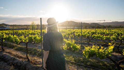 Queensland Is Now Home to a Self-Guided Wine Trail That Showcases More Than 70 Wineries