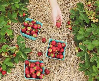 Five Places Where You Can Pick Your Own Summer Berries Near Wellington
