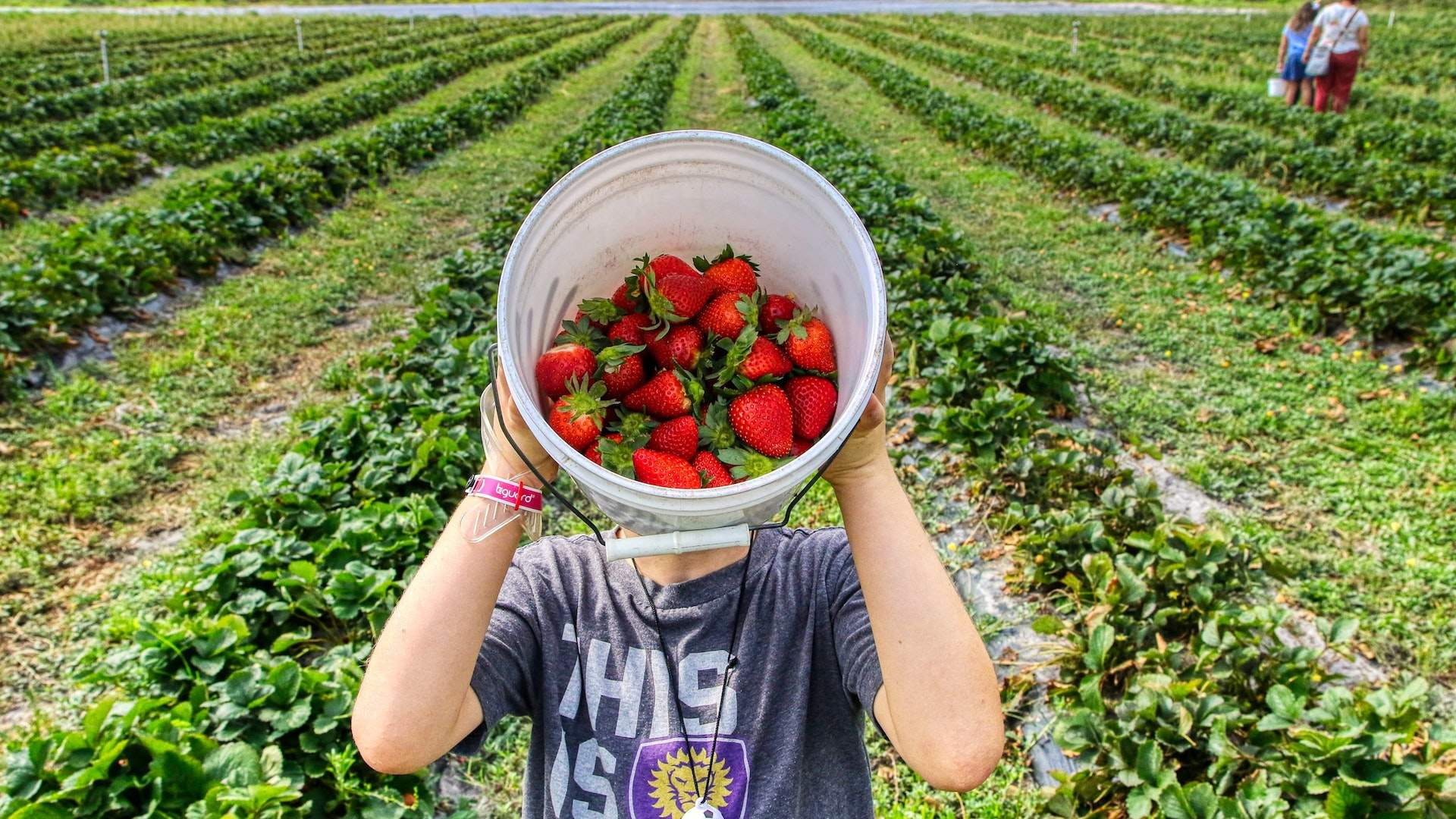 Six Places Where You Can Pick Your Own Summer Berries in Auckland