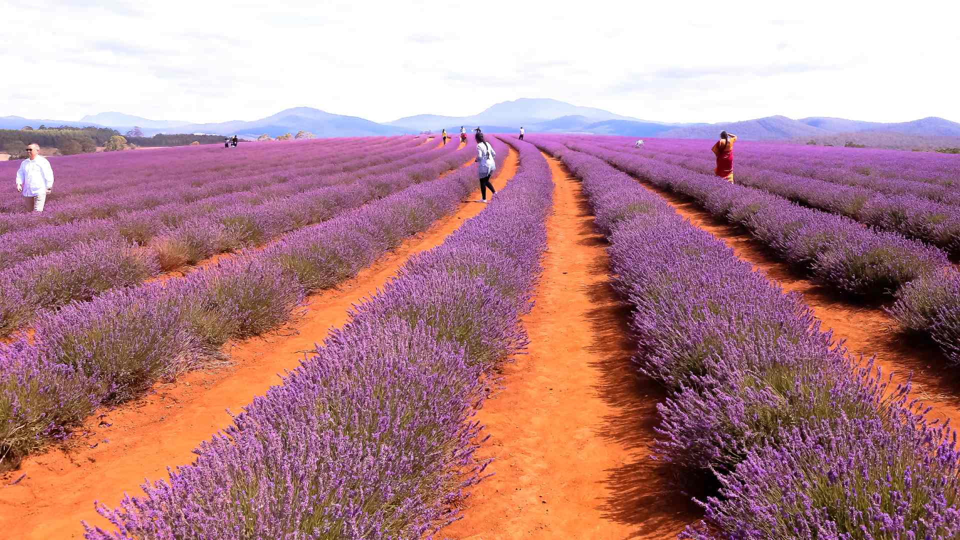 Eight Stunning and Unusual Places In Australia That Will Transport You to Europe