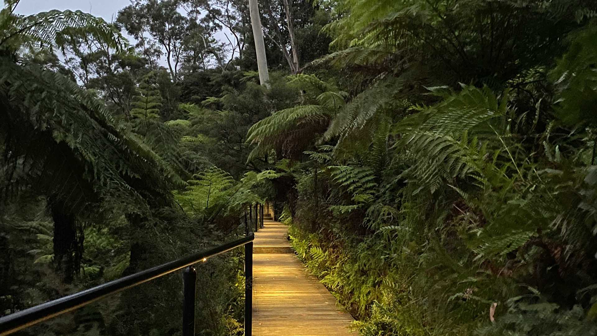 You Can Now Hike This Illuminated Night Walk Through the Katoomba Falls Reserve