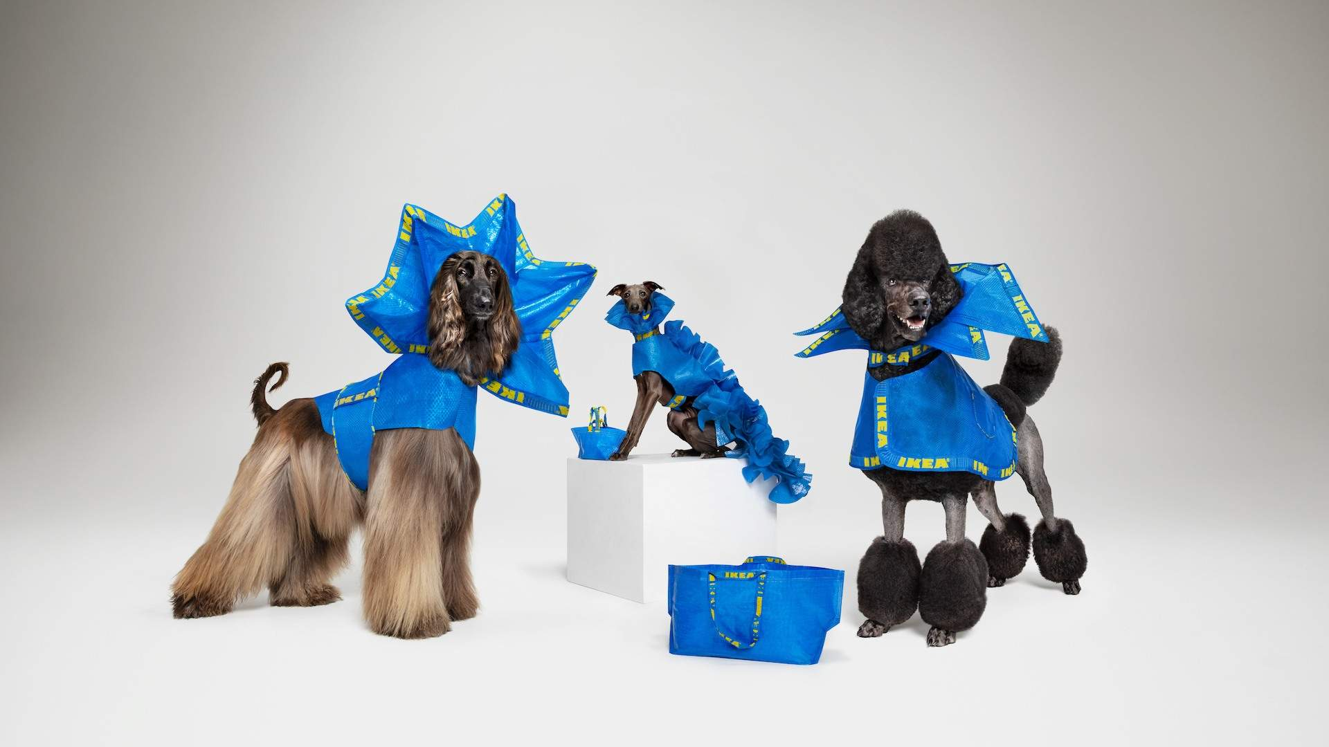 IKEA Wants You to Turn Its Iconic Blue Shopping Bags Into Outfits for Your Dog