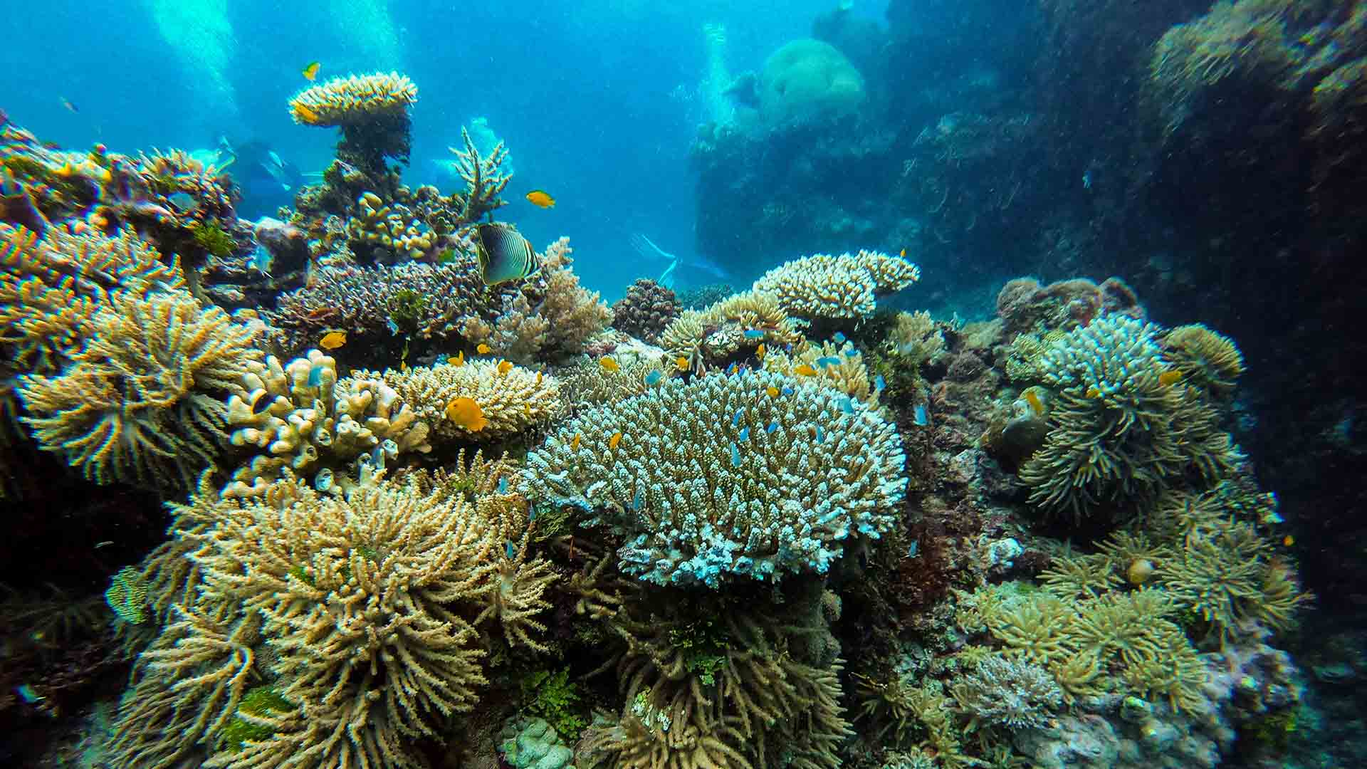 UNESCO's World Heritage Committee Says the Great Barrier Reef Should Be Considered