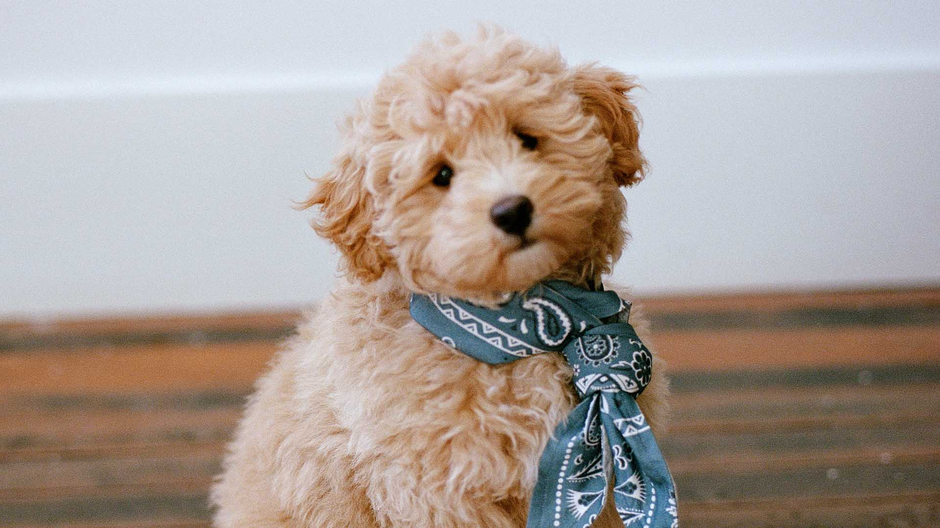 The Upside Has Released a 'Pupside' Bandana for Dogs and It's Donating the Proceeds to RSPCA NSW